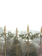 玉川にも降雪